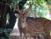 Deer at Ballavpur Wildlife Sanctuary