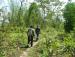 Hiking in Chaaya Taal