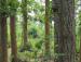 Joypur forest2
