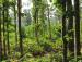 Joypur forest3