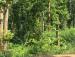 Joypur forest4