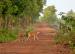 Wild deers at Joypur forest