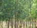 Around Sonajhuri forest