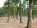 Sonajhuri jungle