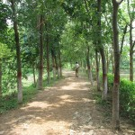 Rasulpur Park