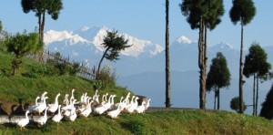 View from Jorepokhri near Lepcha Jagat