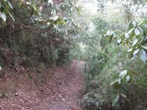 Barsey Rhododendron trek trail