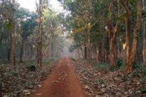 Kuldiha Forest Path