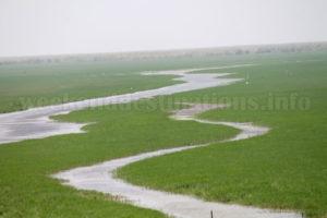 Mangalajodi wetland