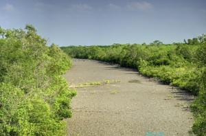 View from Sajnekhali Watchtower