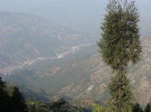 River Teesta from Delo