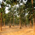 Sonajhuri, Santiniketan
