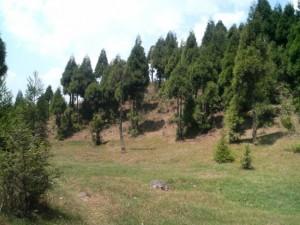 Chimeni Valley