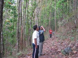 Birdwatching at Kitam
