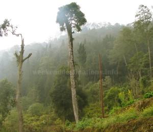 Forest around Icchey gaon