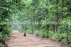 Garh Jungle, Bardhaman