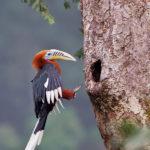 Hornbill near Galeythar. Courtesy Wikipedia