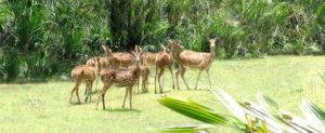 Wild animals at Bhitarkanika
