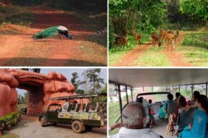 Chandak Jungle Safari