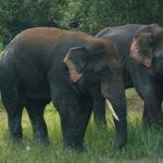 Chandaka Dampara Wildlife Sanctuary