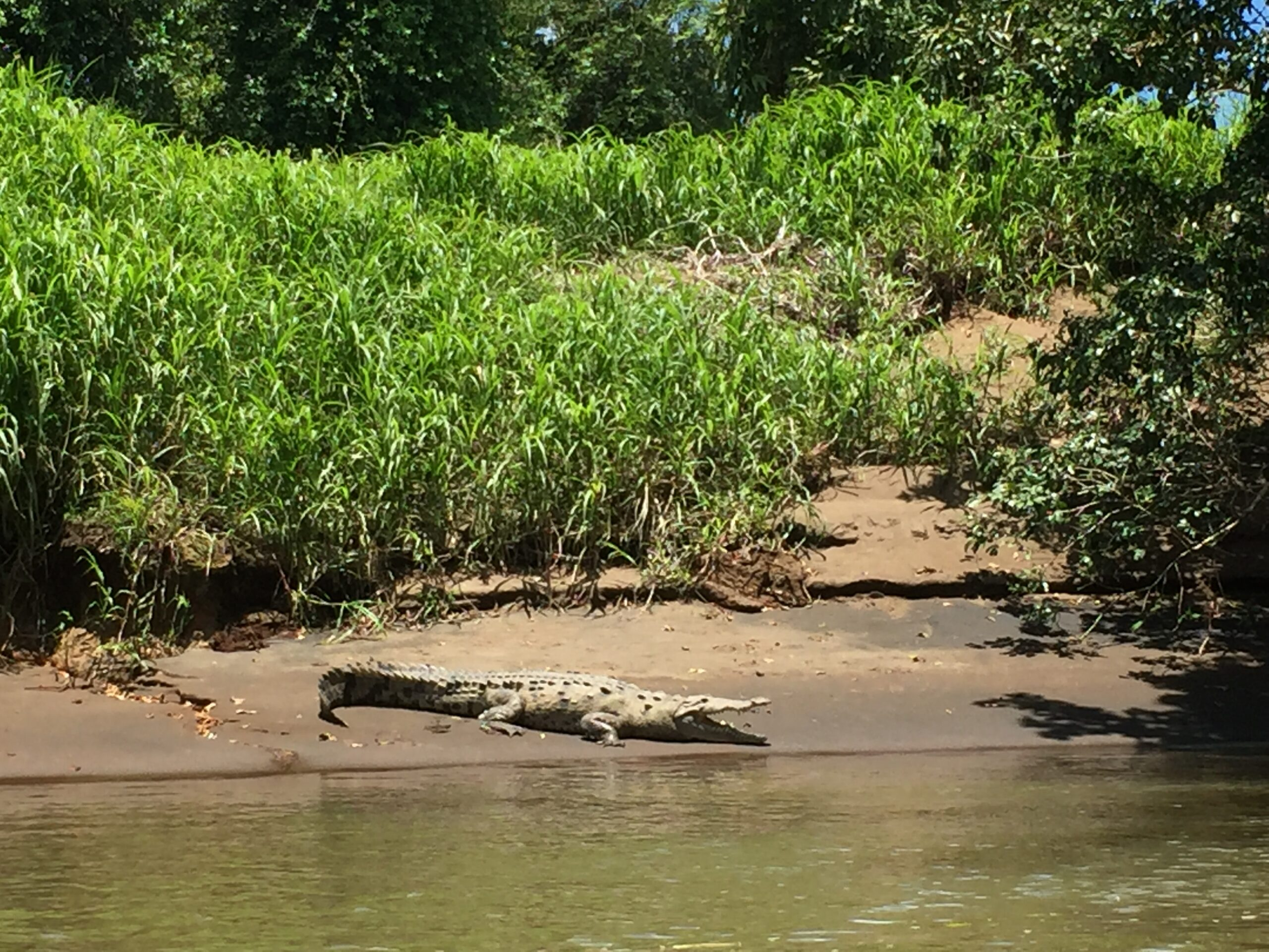 Croc just sitting on the river bank next to where our boat passed