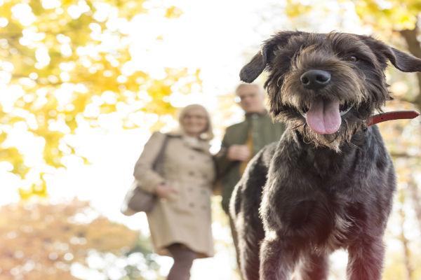 Bringing home a rescue dog