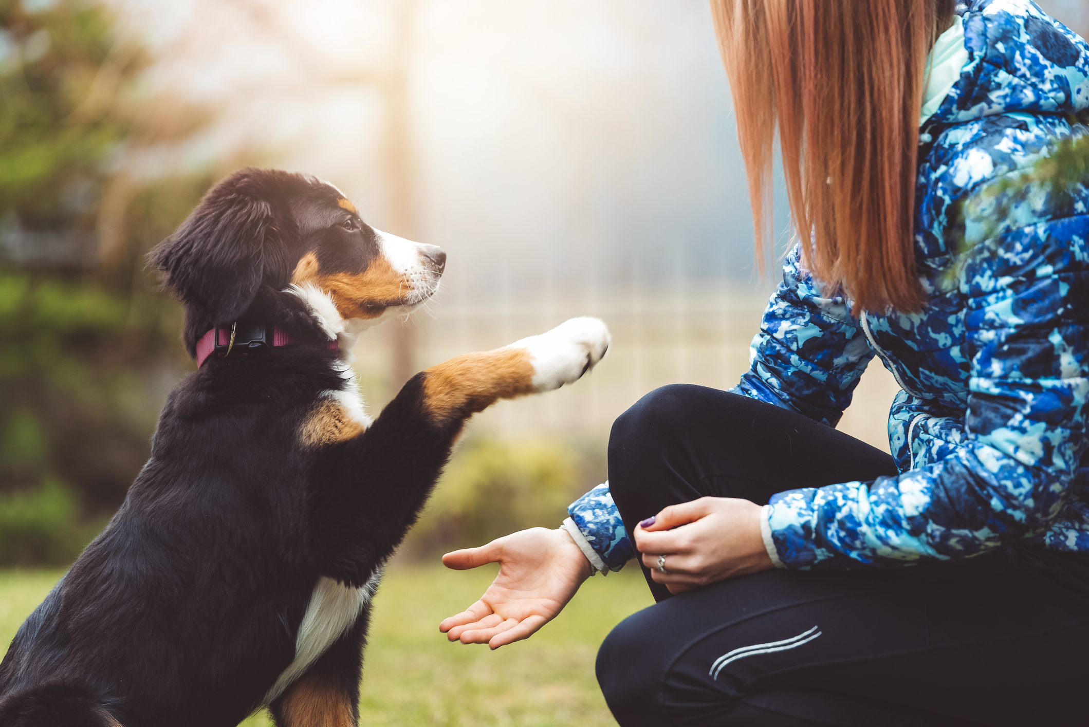 Dog care guides