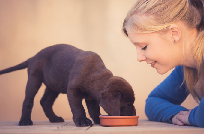 Feeding puppies & dogs