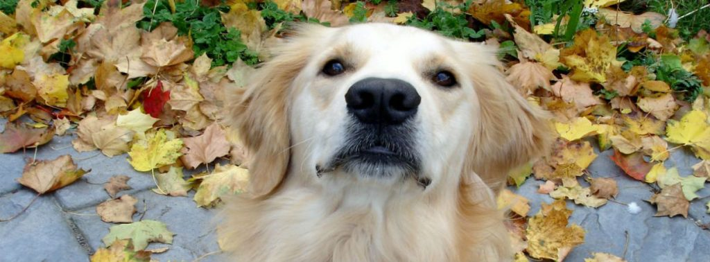 Finding help for my fearful dog – what I wish I'd known