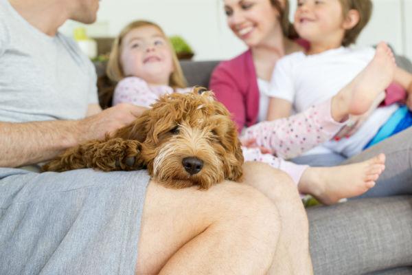 Preventing obesity in dogs