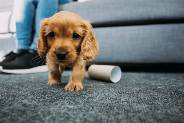 Coping with the puppy blues