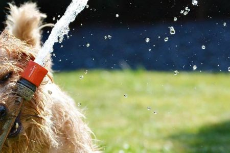 How to keep dogs cool