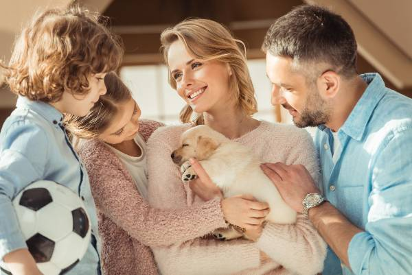 How to choose the right breed of dog