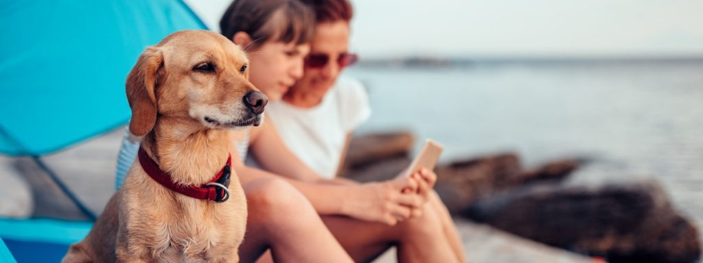 How to find dog friendly holidays in the UK