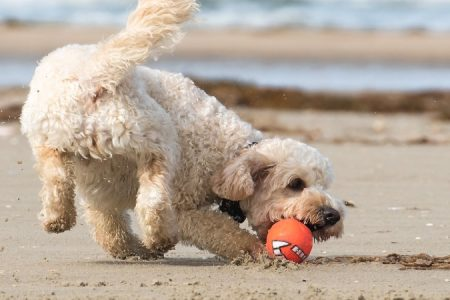 dog friendly staycation