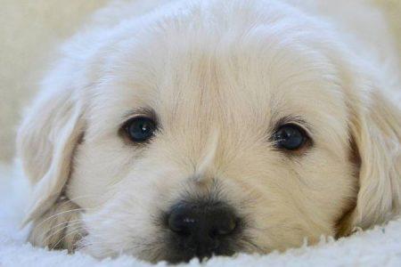 Do puppies sleep a lot?