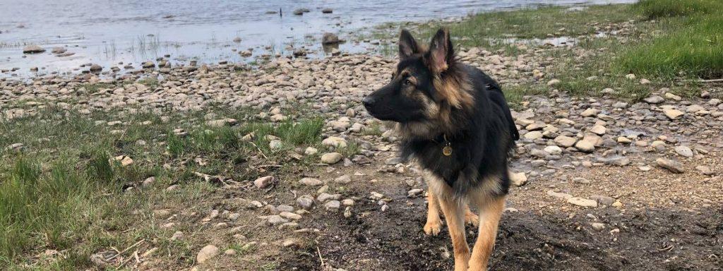 'My Dog has Irritable Bowel Disease'
