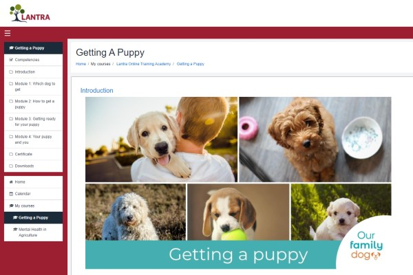 Getting a puppy e-learning course