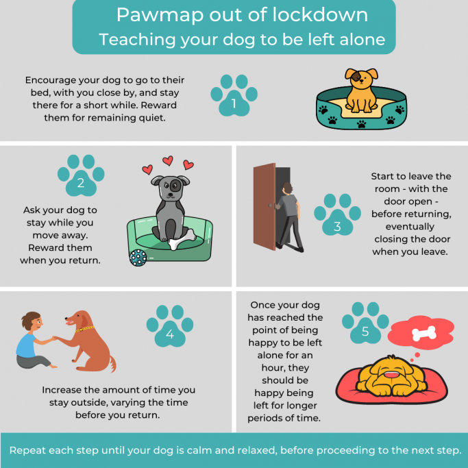 5 steps to teach your dog to be left alone
