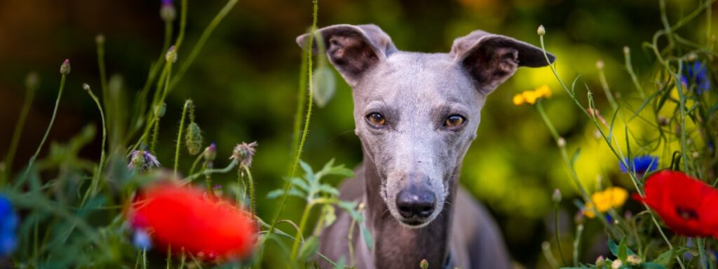 Photographing dogs: tips from a professional