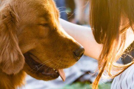 Dog care safety