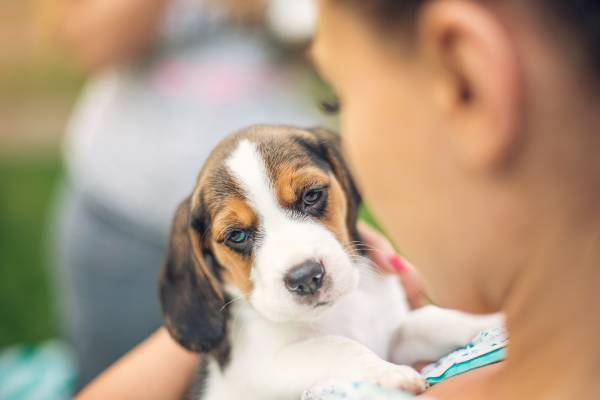 Watch 'Your New Puppy: the first 60 days'