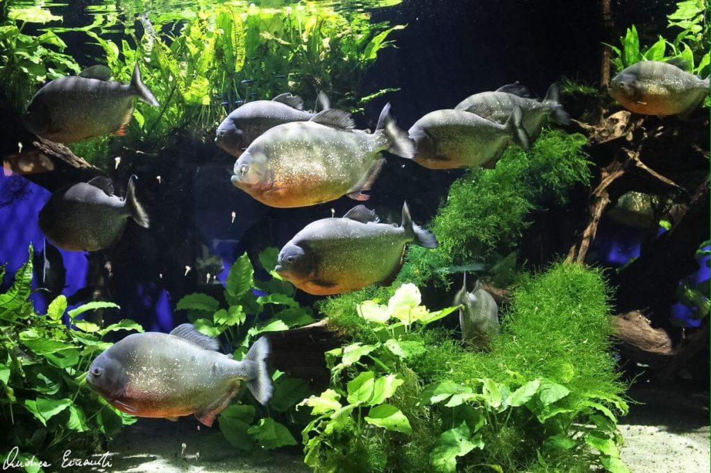 Matlock Bath Aquarium image