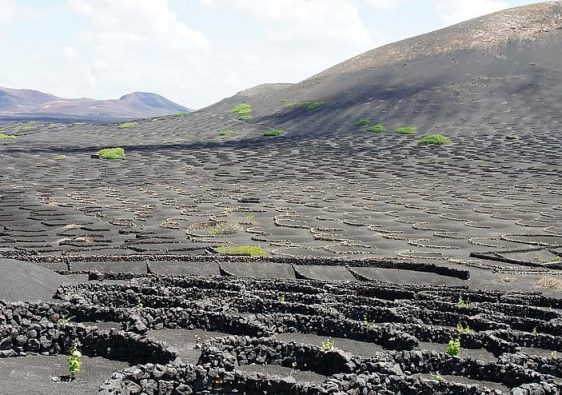 Best Wine Tours In Lanzarote Featured Image