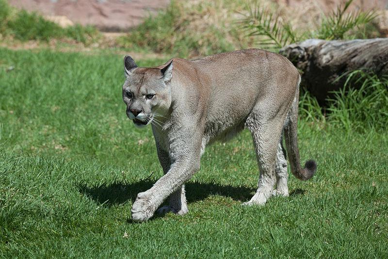 Rancho Texas Lanzarote Park - Animals