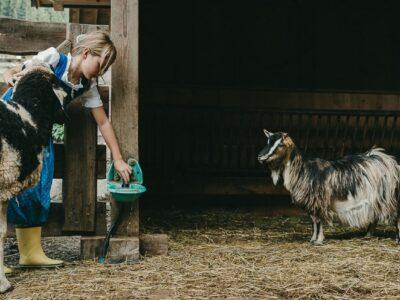 Una giornata in fattoria