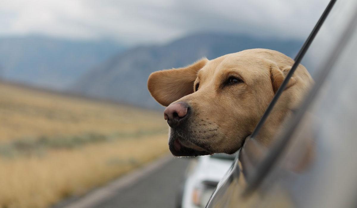 İstanbul Köpek Okulu, İstanbul Köpek Eğitimi, İstanbul Köpek Eğitmeni, İstanbul Köpek Eğitim Merkezi, İstanbul Köpek Eğitim Merkezleri Fiyatları, İstanbul Köpek Eğitim Fiyatları, İstanbul Köpek Eğitim Okulu, İstanbul Köpek Eğitim Çiftlikleri, Köpek Eğitimi İstanbul Avrupa Yakası, İstanbul Köpek Eğitim, İstanbul Köpek Eğitim Merkezleri, İstanbul Köpek Eğitmenleri, İstanbul Avrupa Yakası Köpek Eğitim Merkezleri, İstanbul Köpek Eğitim Merkezi Fiyatları