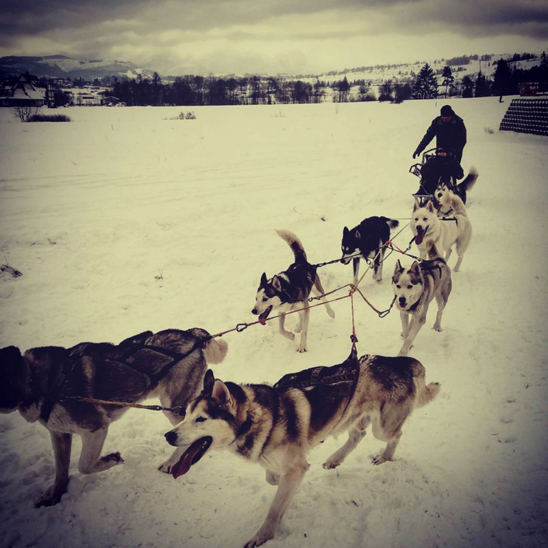 Husky Sledding- Winter Activities in Zakopane