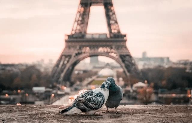 PARIS SPOTS HONEY MOON DRIVER CAR TOUR PARIS