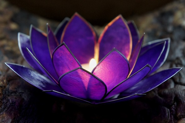 Lotus paars binnen